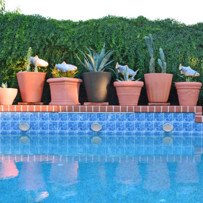 Just moved? Build a Temporary Garden at Your New Home