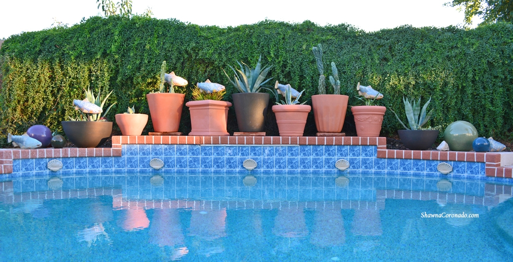 Cactus and Succulents  in Container Gardens along wall