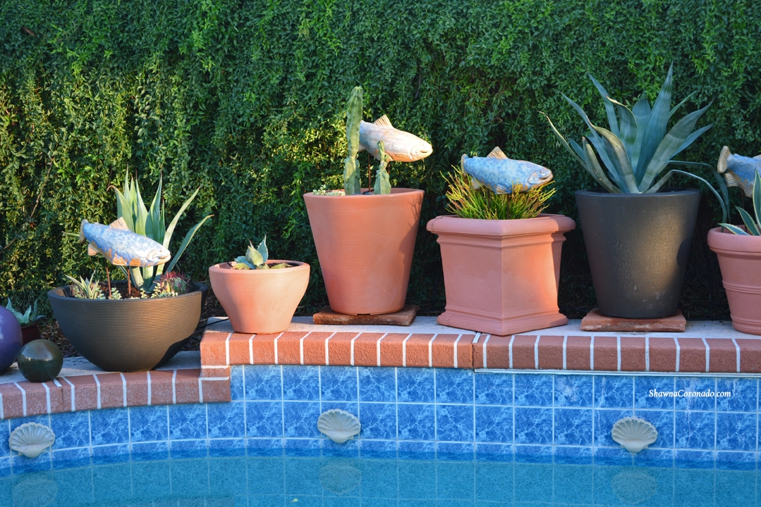 Cactus and Succulents by Pool in Container Gardens