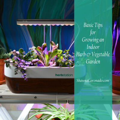 Indoor Vegetable Gardening Guide for Beginners