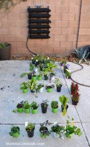 Varden Kit Living Wall Plant Planning