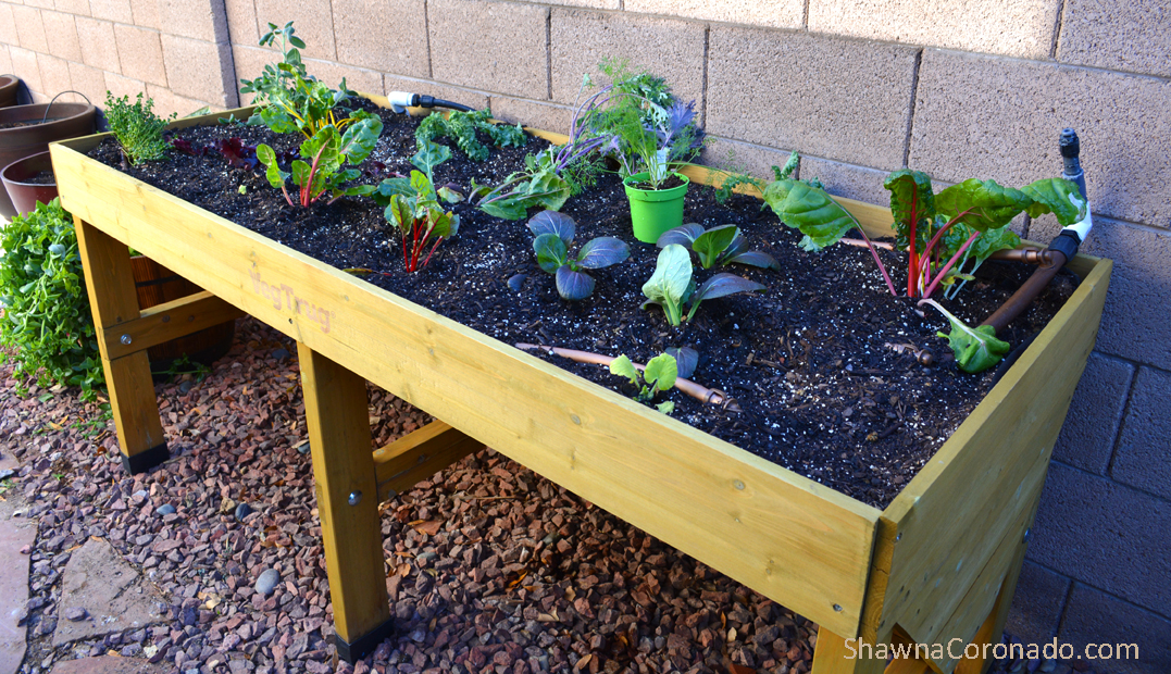 Herbs and vegetables in elevated garden beds