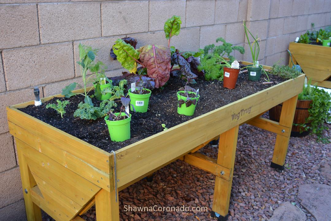 Planting vegetables in elevated garden beds