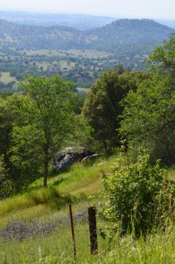 California Roadside Mountain View