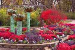 Illinois Cantigny Park Purple and Burgundy Fall Flowers copyright Shawna Coronado