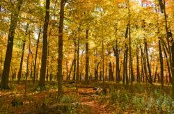 Fall in Illinois copyright Shawna Coronado