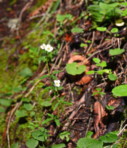 Muir Woods Park Spider and Flower copyright Shawna Coronado.jpg