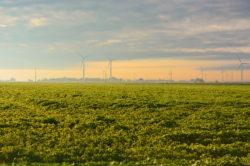 Wind Collecting in Ohio copyright Shawna Coronado