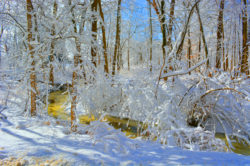 Winter in the Woods copyright Shawna Coronado