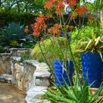 Drought tolerant garden © copyright Shawna Coronado