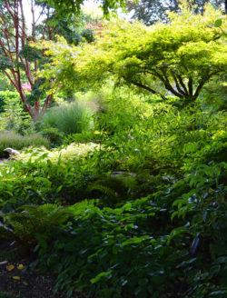 Botanic Garden in Washington copyright Shawna Coronado