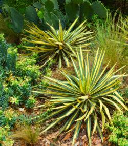 Desert garden copyright Shawna Coronado