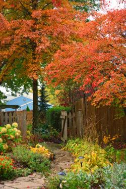 Fall 2014 Side Garden