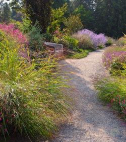 Purple Path at Botanic Garden in Washington copyright Shawna C